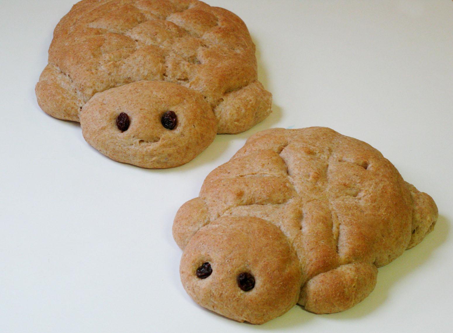 bread turtle turtle bread alligator and turtle bread bread turtle by ...